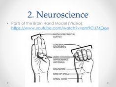 Brain Anatomy And Function, Spinal Cord, Neuroscience, Memes, Meme, Neurology
