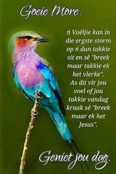 Good Morning Wishes, Day Wishes, Good Morning Quotes, Afrikaanse Quotes, Goeie Nag, Goeie More, Funny Quotes, Messages, Words