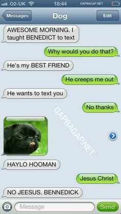 Hilarious Text Of The Day ft. Funny Dog