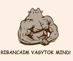 """Find and save images from the """"pusheen magyar😉"""" collection by Zoé Rácz (zoeracz) on We Heart It, your everyday app to get lost in what you love. Pusheen Cat, Grumpy Cat, Cat Memes, Funny Moments, Cuddling, We Heart It, Cat Lovers, Haha, Comedy"""