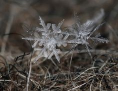 macro photographs of a snowflake by andrew osokin ~ Twisted Sifter