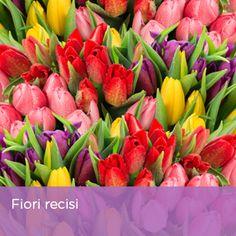 Immancabili: i fiori recisi