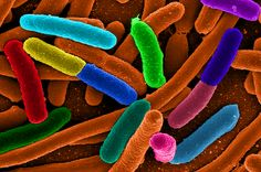 Antibiotic Resistance Now A Global Threat According To Latest WHO Report