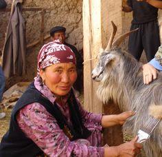 Combing cashmere ~ Kyrgyzstan