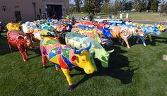 Cow Parade, La Jolla 2009