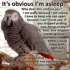 Training Your Pet Parrot Funny Birds, Cute Birds, Funny Animals, Cute Animals, Baby Animals, Parrot Perch, Parrot Bird, Caique Parrot, Feathered Dinosaurs
