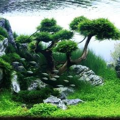 "Java moss as ""trees"""