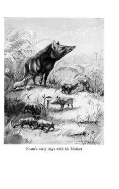 Wild animal ways / - Biodiversity Heritage Library