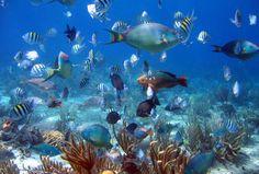 snorkeling in cozumel   Cozumel Snorkel