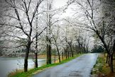 Why Does Rain Smell Good? The scent, known as petrichor, is the result of a various factors; Oils secreted by some plants  during dry periods are released into the air when it rains. Also, rain fall results in the production of chemicals by actinomycetes, soil-dwelling bacteria. These aromatic compounds combine to create the pleasant scent when rain hits the ground. Another scent associated with rain is ozone. During a thunderstorm, lightning can split oxygen and nitrogen molecules in the…