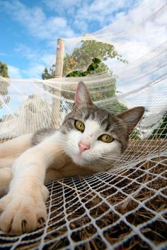 winery-cats, Pippin – Hay Shed Hill Wines, Margaret River, Australia.@Leading Wineries of Napa.