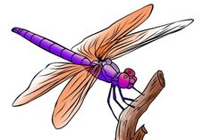 free dragonfly clip art 21 dragonfliez pinterest dragonflies rh pinterest co uk dragonfly clipart black and white dragonfly clipart svgs