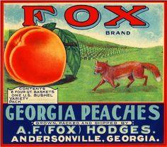 Andersonville Georgia GA Fox Peach Georgia Peaches Fruit Crate Label Art Print | eBay