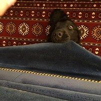 This dog who just wanted to surprise his best friend. | The 42 Most Awkward Dogs Of 2014