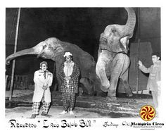 "circo ""El Búfalo Bill"""