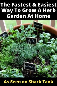 Get The Perfect Herb Garden With These Simple Tips Herb gardening is an excellent way to make sure that your family is getting the best produce that they can. Growing Veggies, Growing Herbs, Growing Flowers, Herb Garden Design, Lawn And Garden, Rooftop Garden, Green Garden, Garden Plants, House Plants