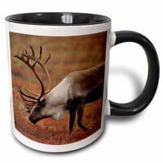 3dRose Bull Caribou wildlife, Denali, Alaska, USA - US02 GRE0155 - Gerry Reynolds, Two Tone Black Mug, 11oz