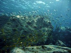 Plenty of life under the waves