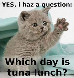 Which Day is TUNA LUNCH?