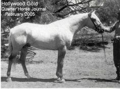 Hollywood Gold  Quarter Horse Legend