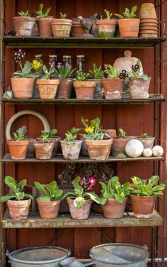 Clay pots with flowers on a shelf: Joy source Garden Blog: Frestelser in different colors.