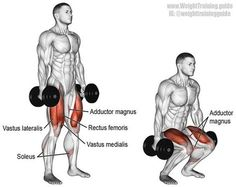 Dumbbell squat. A major compound exercise. Target muscles: Gluteus Maximus and Quadriceps. Synergists: Adductor Magnus and Soleus. Dynamic stabilizers (not highlighted): Hamstrings and Gastrocnemius. Stabilizers (not highlighted): Erector Spinae, Levator https://www.musclesaurus.com/
