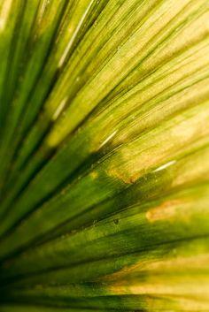 Nieuw in mijn Werk aan de Muur shop: Palm detail
