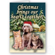 Christmas Brings Our Hearts Together, Puppy Kitten Greeting Cards from http://www.zazzle.com/weimaraner+christmas+cards