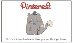 Le #SMO expliqué par des chats | pinterest