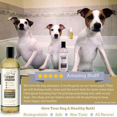 4-Legger Oatmeal with Aloe and Lavender Certified Organic Dog Shampoo