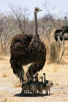 From ostriches to cassowaries, here's your guide to friendly and unfriendly big birds. Pretty Birds, Love Birds, Beautiful Birds, Animals Beautiful, Animals And Pets, Baby Animals, Cute Animals, Animal Babies, Fur Babies
