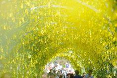世界にも認められた絶景!この春『あしかがフラワーパーク』の藤の花が見たい | RETRIP[リトリップ]