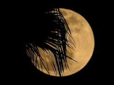 No te pierdas la superluna de este domingo | ElZol.com - El Zol ...