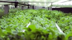 Is the future of farming inside a shipping container? https://link.crwd.fr/T5W @ManhattanProEng #Farming