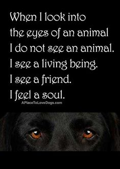 """When I look into the eyes of an animal I do not see an animal. I see a living being. I see a friend. I feel a soul."" I also see my family that loves me unconditionally. Amen."