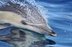 May I always swim as fast and as far as I want.... May I always chase and catch my own fresh food... May I never be harmed by the roars of a sonic cannon... May I never be caught in a net and drowned.... May a human never lay their hands on me... May I forever remain free. ~Oceans of Freedom
