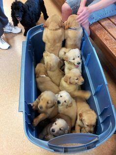 bucket of cute