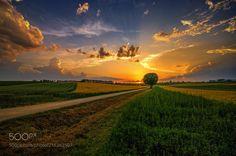 sunset affair (Ralf Thomas / Stuttgart / Germany) #PENTAX K20D #landscape #photo #nature