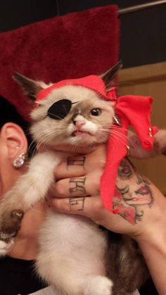 Meet sir stuffington.  His owner made him an eyelash to make him look like a pirate