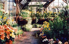 Niche Flower shop - Rotterdam - the Netherlands