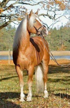 What a pretty golden horse!