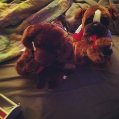 Dasani is the Chocolate Lab:-) The other dog is Bailey:-) She is a boxer:-)