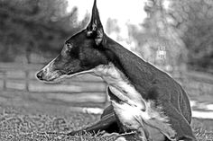 Lucky - a dogs portrait by Tassilo Edelsbacher on Dog Portraits, Whale, Horses, Dogs, Animals, Whales, Animales, Animaux, Pet Dogs