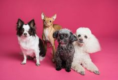What Is The Shortest Dog Lives? - puppieslove.net