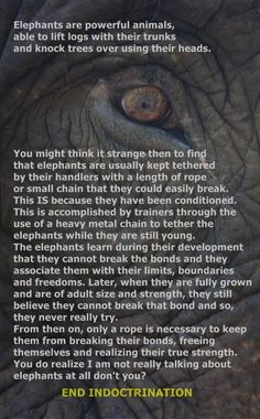 Elephants are powerful animals.