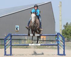 Horseback Riding Tips, Self Regulation, Equestrian, Horses, Learning, Partridge, Advice, Group, Board