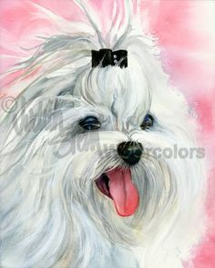MALTESE Dog Pet Portrait Watercolor Painting Art Print by k9stein, $22.50