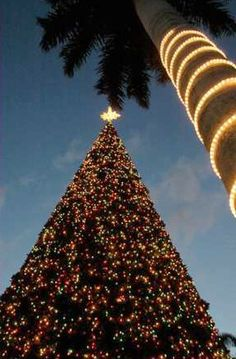 The famous 100-Foot Christmas Tree in Delray Beach, FL. It's on display through January 1st of every year. Come tour the tree and see the magic inside!    http://www.i-love-delray-beach.com/christmas-tree-lighting-in-delray.html