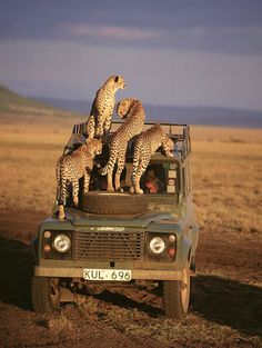 Land Rover and African Chitas in Kenia - - App for Land Rovers is now available in App Store