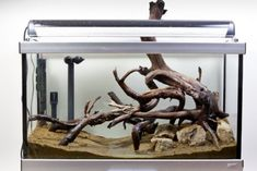 How to set up an African biotope aquarium   Features   Practical Fishkeeping